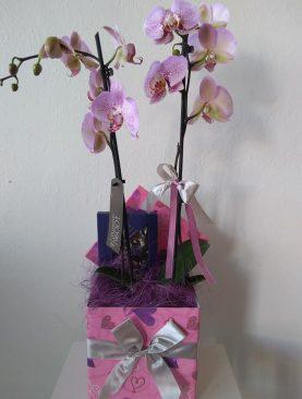 Darčekový box Orchidea