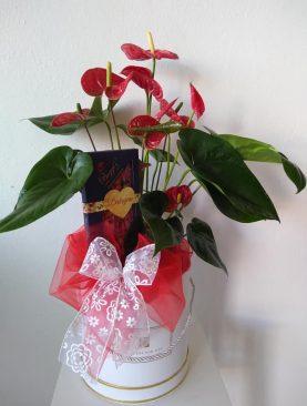 Darčekový box Antúria